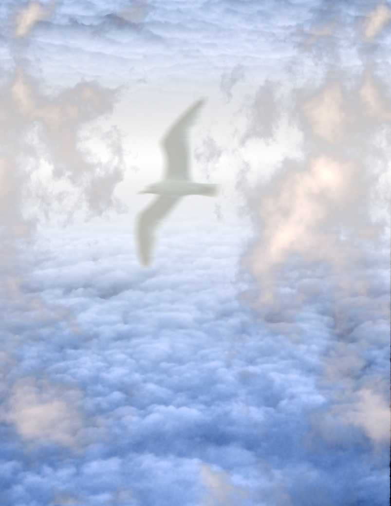 White Bird in Clouds
