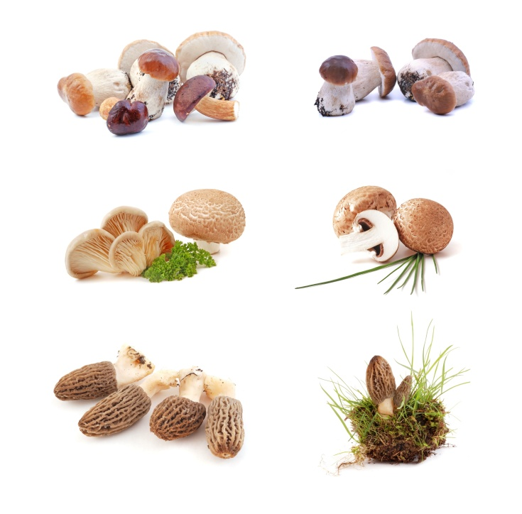 Mushrooms - morchella mushrooms, boletus mushrooms, oyster mushrooms, on white background.